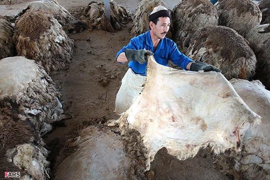 عکس: کارگاه تولید چرم | پایگاه اطلاع رسانی رجاکارگاه تولید چرم