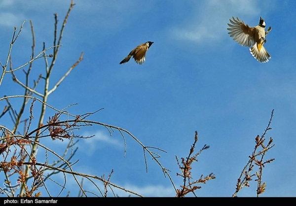 عکس/ طبیعت بهاری شیراز