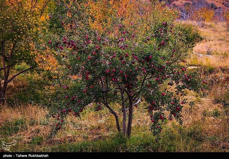 مناطر زیبای پاییز