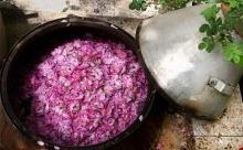 با آغاز گلچینی از گلزارهای محمدی شهرستان کاشان ، برداشت گل محمدی در سراسر کشور آغاز شد .