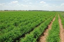 «جلوگیری از خرد شدن اراضی کشاورزی و باغات» از سال ۸۵ تصویب شده است اما هر روز اراضی کشاورزی و باغات کوچکتر میشوند. عدهای زمینهای کشاورزی را به قطعات کوچک تقسیم میکنند و این زمینها را بوسیلة قولنامه به دیگران میفروشند.
