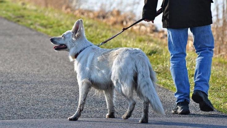 هنوز قوانین کشور در ارتباط با بحث سگگردانی و رفت و آمد حیوانات در معابر عمومی خلاءهای جدی دارد. بخش مهمی از این خلاء مربوط به ضمانت اجرا قوانین و پیشگیری از آسیبهای سگگردانی در خیابانها است.