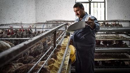 در سومین دوره همایش طلایه داران اقتصاد مقاومتی، حمید زارع به عنوان چهره برتر انتخاب شد و مورد تقدیر قرار گرفت. او یکی از موفق ترین پرورش دهندگان طیور در استان فارس است که علاوه بر تولید انبوه بلدرچین، در راه اندازی 70 واحد تولید بلدرچین در استان فارس نقش مهمی ایفا کرده است.