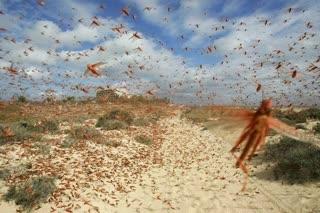 سخنگوی سازمان حفط نباتات کشور گفت: حمله گسترده ملخهای صحرایی به کشور از حدود ۱۰ روز آینده آغاز میشود.
